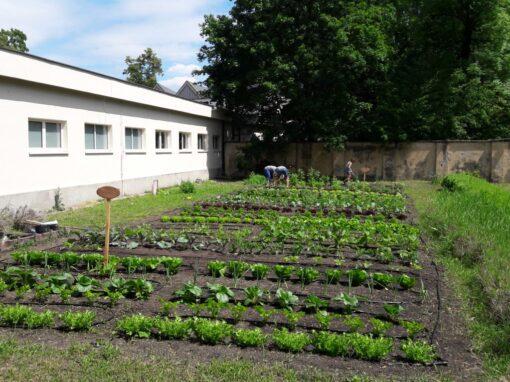 Ogród warzywny Króla Jana