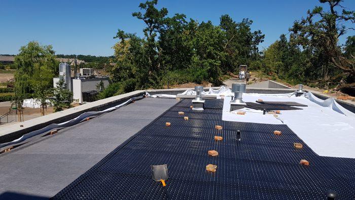 Zielony dach ekstensywny